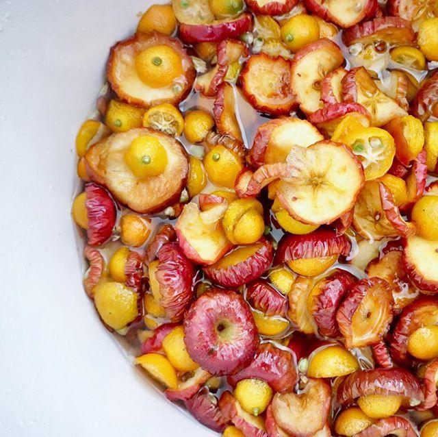 おはようございます!.3連休、お天気に恵まれたので、お出かけされてる方多いのでは?.姫林檎を見つけたので、金柑と姫林檎の酵素を作りました。.林檎の帰経は「肺」で潤肺効果の期待出来る食材、姫林檎は普通の林檎より酸味が強いので「肝」にも入り巡りも良くしてくれる事を個人的に期待しています。.金柑と組み合わせたら、風邪予防の良い酵素になりそうです!.#healthyfood #medicinalfood#fruits#健康 #ヘルシーフード#手作り酵素ジュース #発酵 #発酵フルーツ #薬膳 #中医 #姫林檎 #金柑#潤肺 #風邪予防#ドードーの空@dodonosorakitchenhttps://dodonosora.jp/