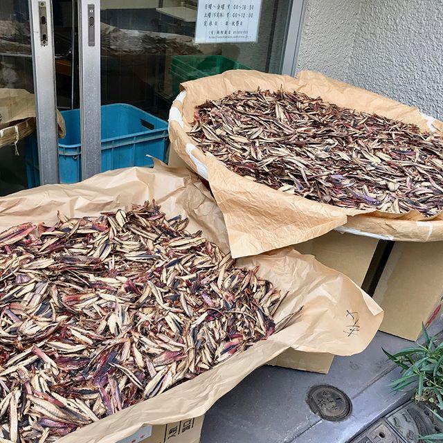 こんにちは!.今日から11月!飲食店では、お節料理の予約が始まりましたね〜.美味しいお食事作りのポイントは色々あるけど、和食はやっぱり「ダシ」がポイントですよね!.食養学会の講座で使っている、鰹節問屋さんの鰹節が本当に美味しい。.なんと東京都の本郷で作ってるんですよ!.年末年始向けに都内の小料理屋さんへの出荷が増えるとかで、昨日も忙しく気の良い母さんが働いてました。.カツオは「補気補血」元気になる食材です。血が良くなると睡眠も良くなるとも言います。ダシを取った後の鰹節は、醤油と味醂で味付けしてパラパラにしたら、自家製ふりかけにもなりますから、美味しい鰹節を買った時には最後まで使って下さいね!.かつお性味/甘、平帰経/腎、脾補気、補血、健胃、益精貧血、不眠.#healthyfood #medicinalfood#fruits#健康 #ヘルシーフード#手作り発酵ジュース #発酵 #発酵フルーツ #発酵リビングフード#薬膳 #中医 #鰹 #鰹節 #鰹節問屋鵜飼#お節料理#彼ごはん #スムージー#ドードーの空@dodonosorakitchenhttps://dodonosora.jp/