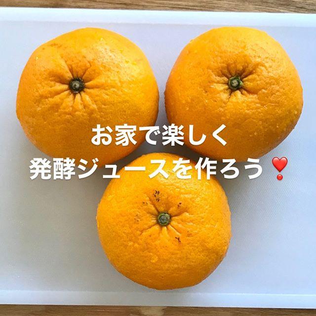 こんにちは!.やっとコートが要らない季節になりましたね〜.いつもなら、お外に出たいシーズンですが、#ステイホーム 今年は、お家で出来る事を!.美味しい柑橘類が出回ってるので、柑橘の発酵ジュースを仕込みました。.柑橘類は一般的に気の巡りを良くしたり、胃の働きを良くする働きがあるとされている食材.そして、発酵もしやすく初心者の人でも比較的簡単に作れる素材です。ステイホーム週間に是非チャレンジしてみて下さい!.作り方はインスタストーリーにアップしてます.#healthyfood#medicinalfood#fruits#miso#日本を元気にするご飯#ヘルシーフード#手作り発酵ジュース #発酵 #発酵フルーツ #発酵リビングフード#温活 #イライラ #ストレス緩和#薬膳 #中医 #手作り味噌体験#発酵麹調味料 #発酵麹調味料マイスターhttps://dodonosora.jp/https://chuigaku-cocokara.jp/magazine/cook/