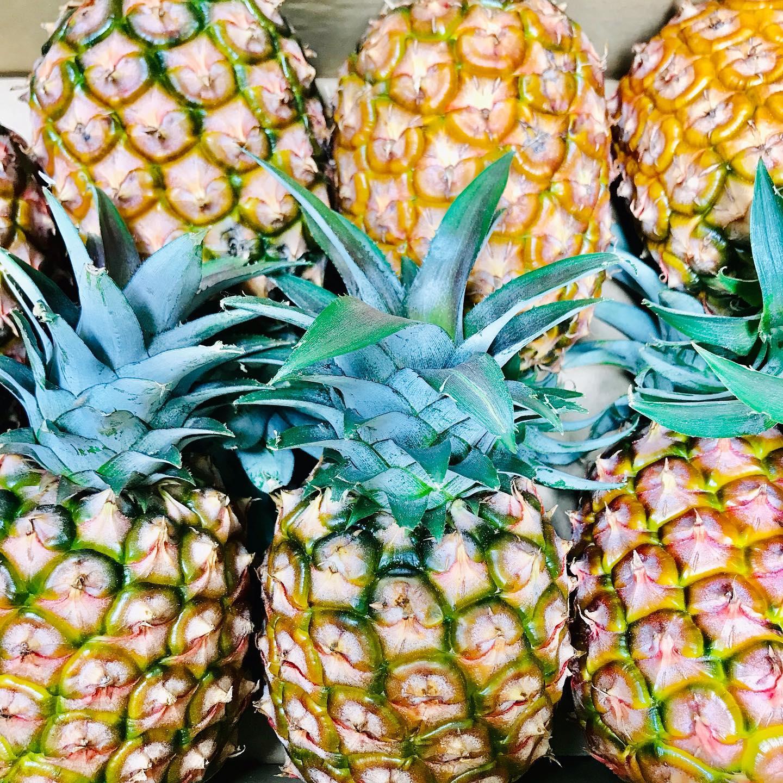 おはようございます!.今年も石垣島からピーチパインを送っていただきました〜.最近ではメルカリで農家さんが直売をしてくれるので、新鮮なパイナップルが空輸で送られてきます!.新鮮なうちに、発酵ジュースを仕込みます。パイナップルの発酵ジュース、本当に美味しいのでオススメです!.パイナップルは体に滞った余分な水を動かして、尿として排出してくれる働きや、疲労回復、消化器系の働きも整えてくれるので、暑くて体が重だるくなるこれからのシーズンには、おすすめですよ!.パイナップル性味/甘酸帰経/肺、脾、腎生津止渇、健脾消食、利尿除湿、疲労回復作用、消化の促進作用.#healthyfood#medicinalfood#fruits #miso#日本を元気にするご飯#ヘルシーフード#手作り発酵ジュース #発酵 #発酵フルーツ #発酵リビングフード#美肌薬膳 #浮腫み予防#水の滞り#梅雨のお悩み#薬膳 #中医薬膳師#手作り味噌体験#発酵麹調味料#発酵麹調味料マイスター#くらし薬膳 #くらし薬膳美容アドバイザーhttps://www.kurashi-yakuzen.net/